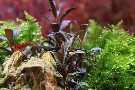 Angebote für meine Pflanzen und Garnelen