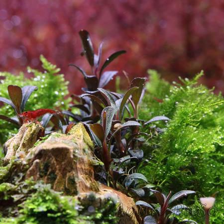 Angebote Pflanzen